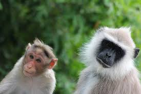 Two monkeys, similar but different in appearance